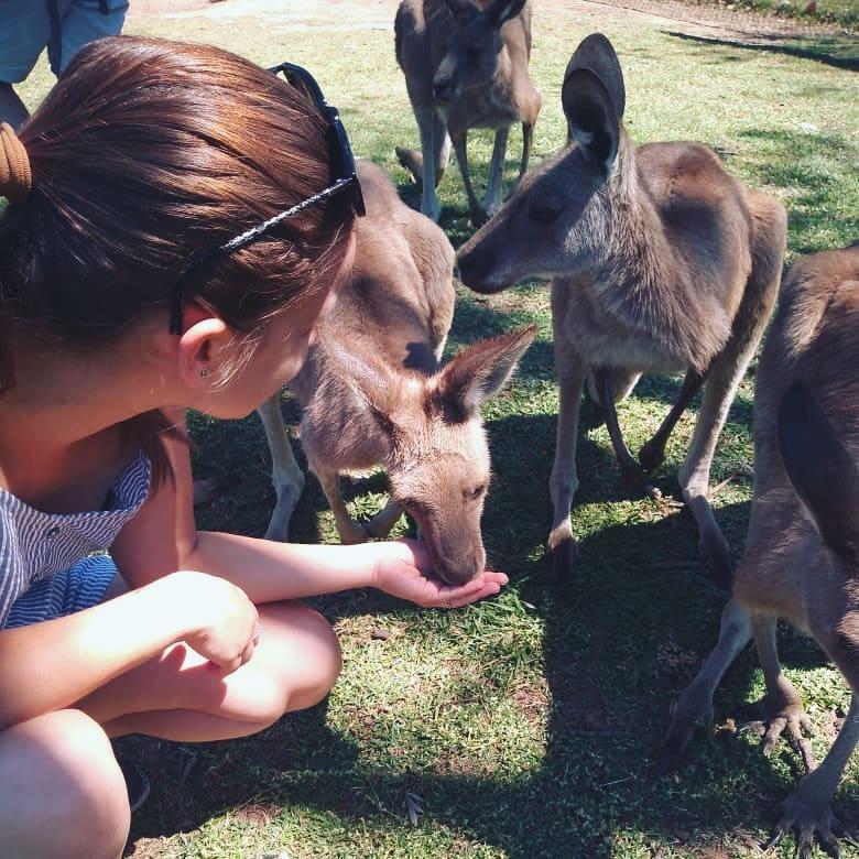The day I met kangaroos!
