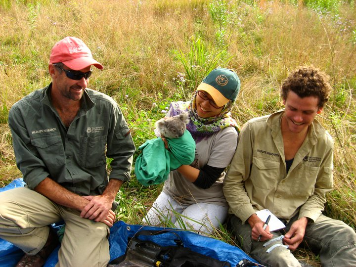 Koala VHF collaring with Sean & Bill, Honours research, 2010.