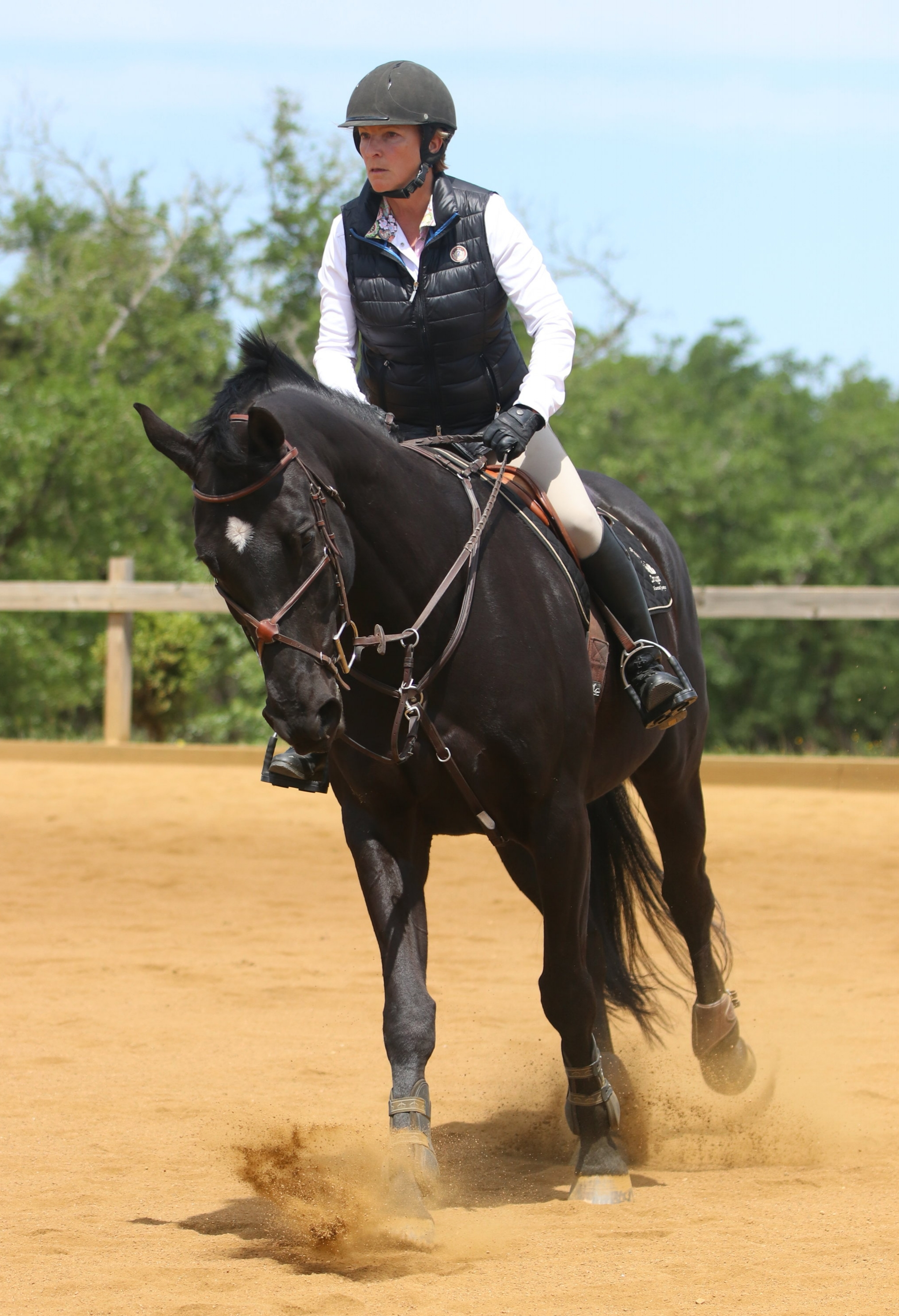 horse training in Austin Texas | Coraggio Equestrian | Train your horse in Austin Tx