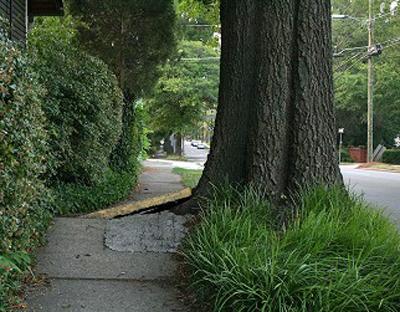 tree_root_sidewalk.jpg