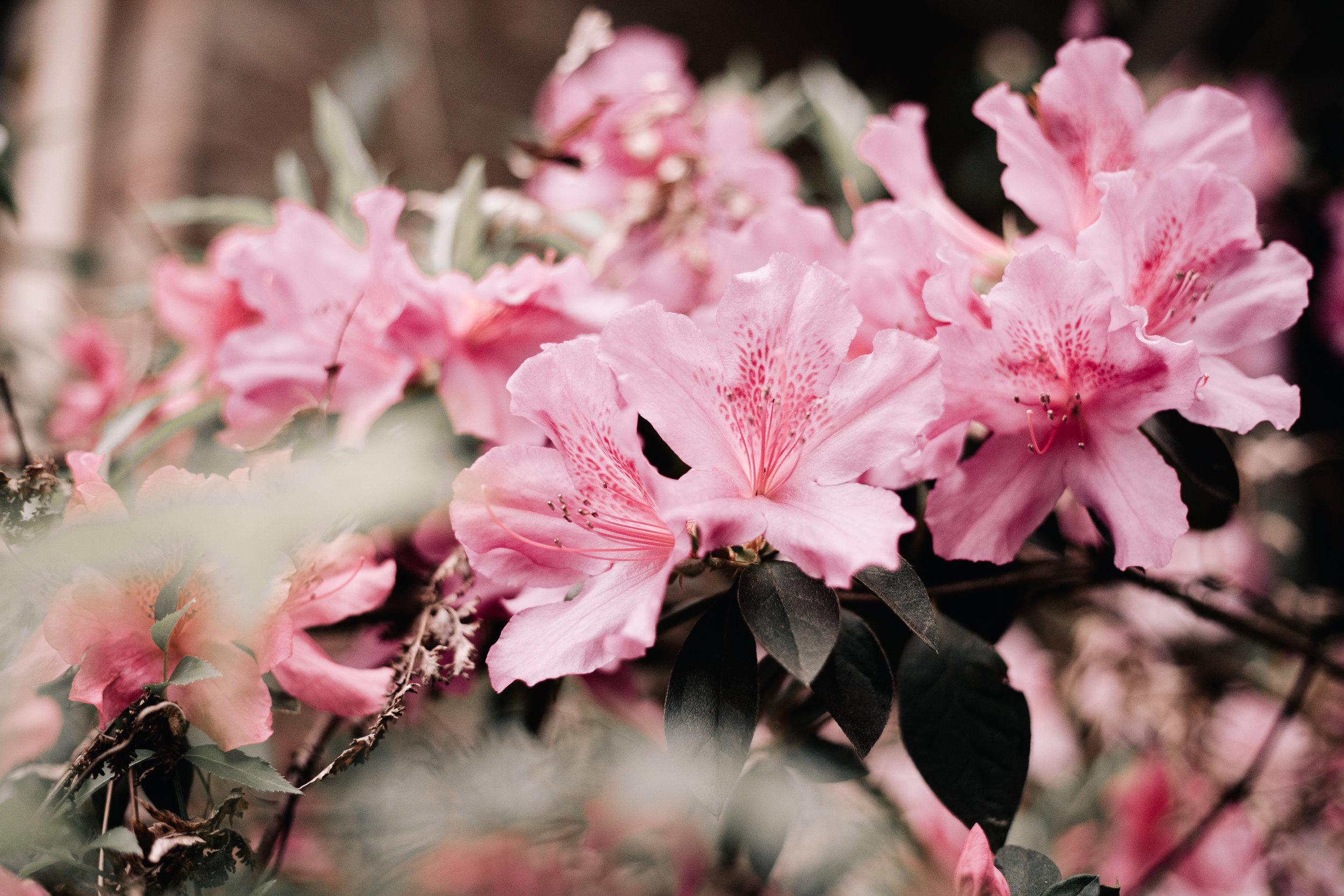 Bellum Issue Four   Bloom  Words by Christian Mott