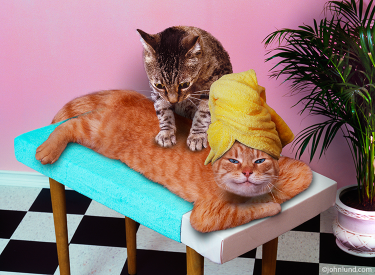 Cats-Massaging.jpg
