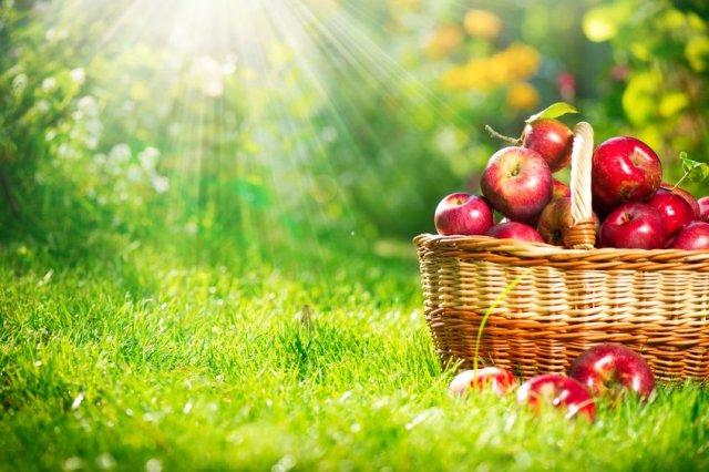 Apples_basket_light.jpg