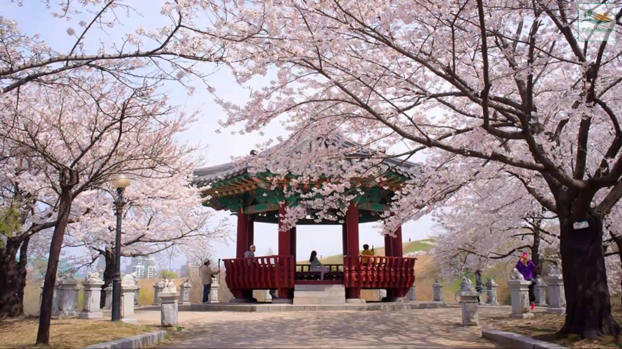 Pagota_Korea_flower.jpg