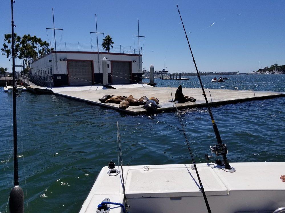 Fishing_seals.jpg