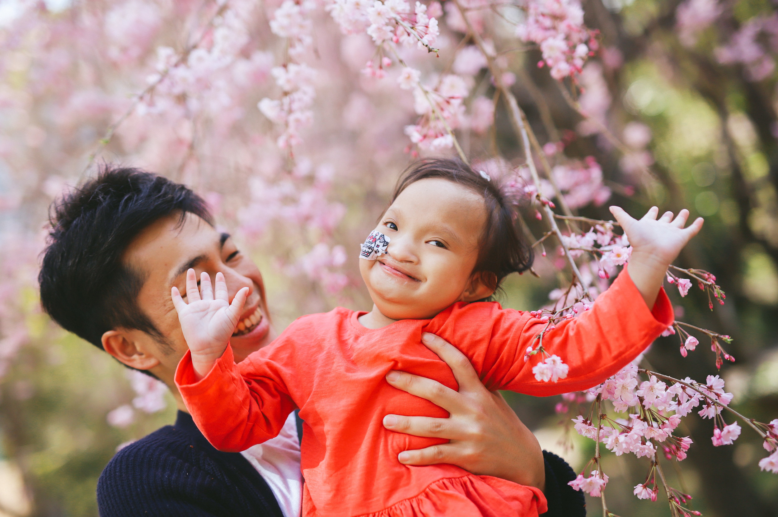 桜の下で大好きなパパと親子写真