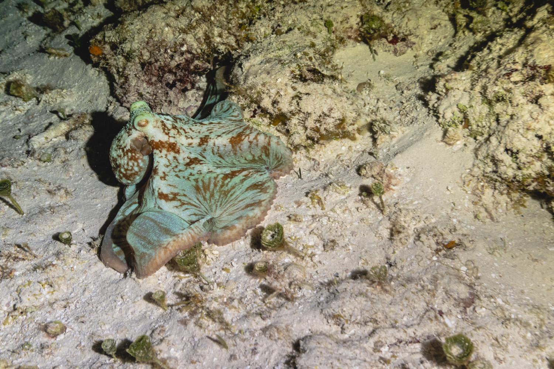 Bajo el mar-00023.jpg