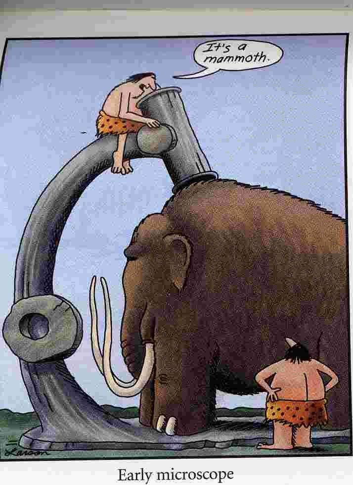 Far Side Mammoth.jpg