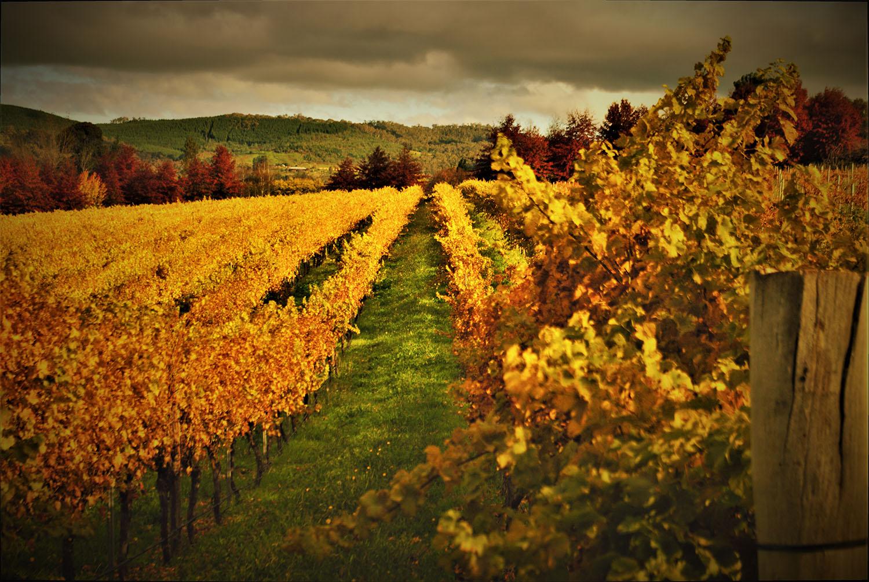 autumn-vine-leaves.jpg