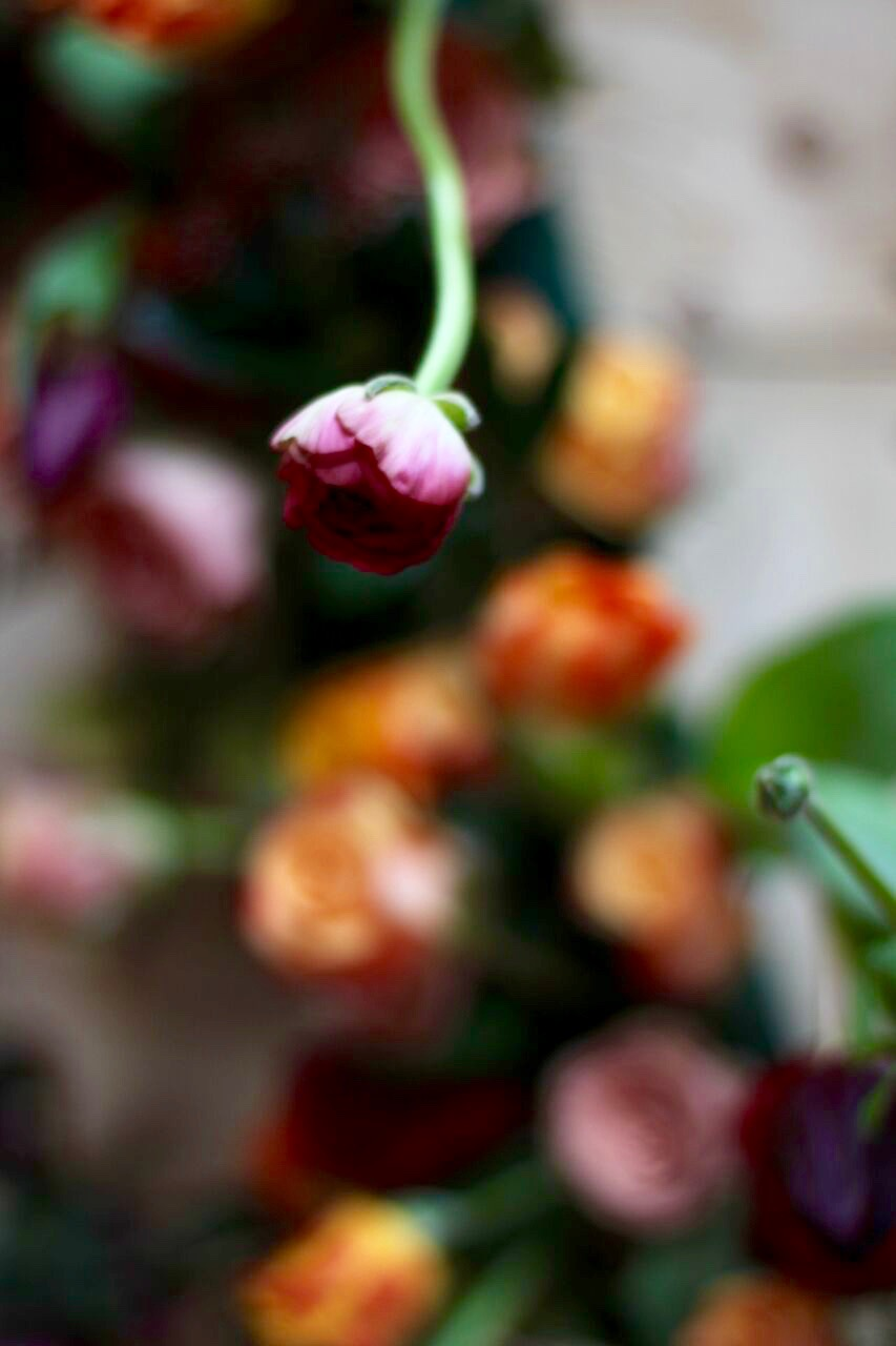 Ranunculus detail - what a beauty.  Image by Julie King