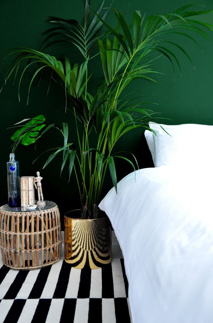 Love how this plant compliments the gold x monochrome details against the emerald wall paint  | Image via Pinterest.