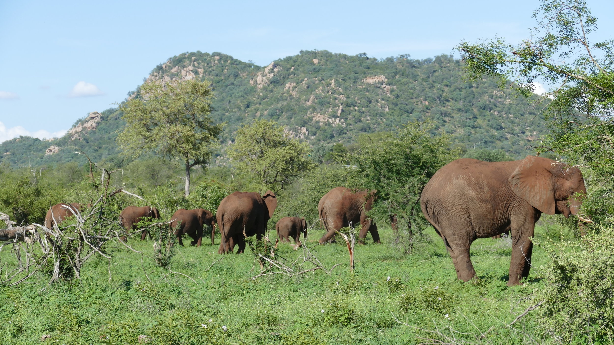 GAMe Drives are approx 2.5 - 3 Hrs in duration and take place on grietjie as well as the neighbouring reserves