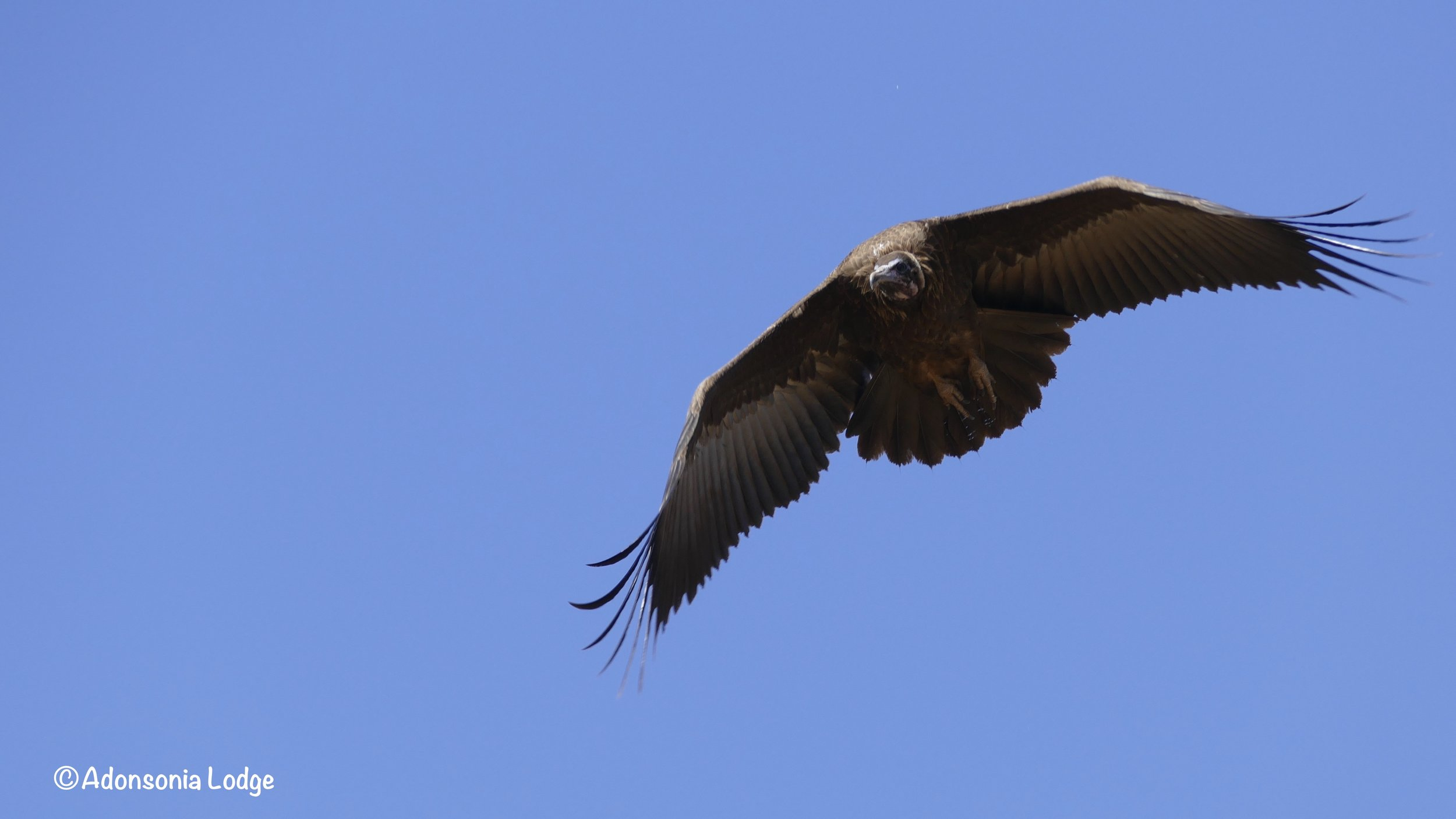 With so many vultures flying around the chances of getting a good shot were fairly high ;)  Did you know that a group of vultures in flight is called a kettle of vultures?