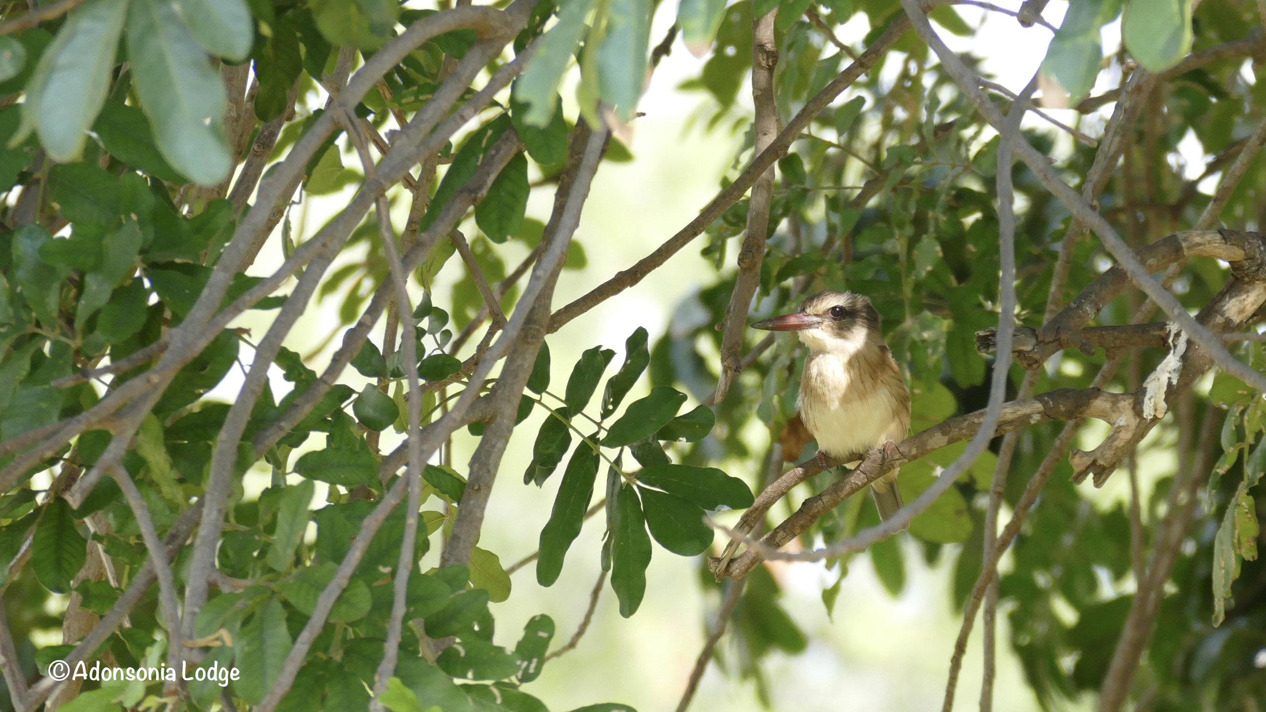 Again, hidden in the foliage….