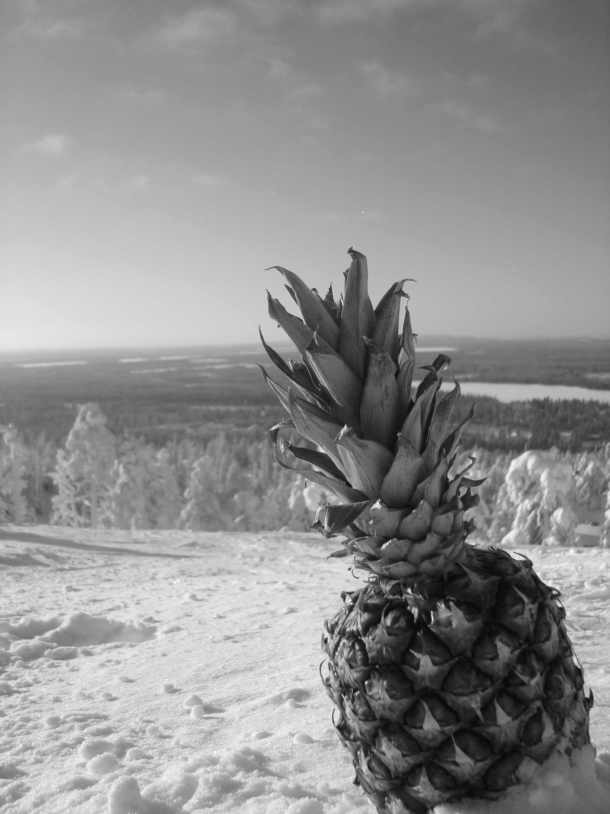 Took a pineapple skiing in northern Finland.