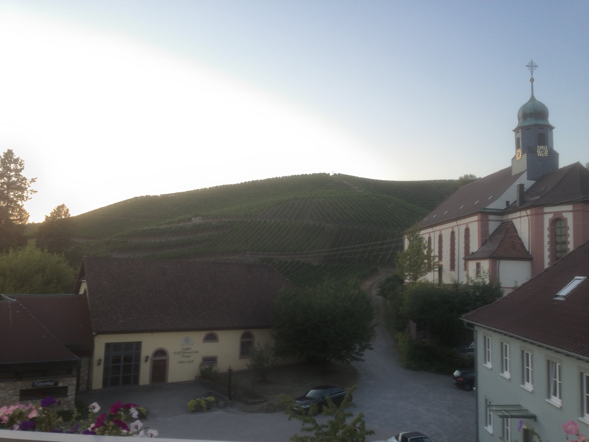 View of the Metternich winery from the room