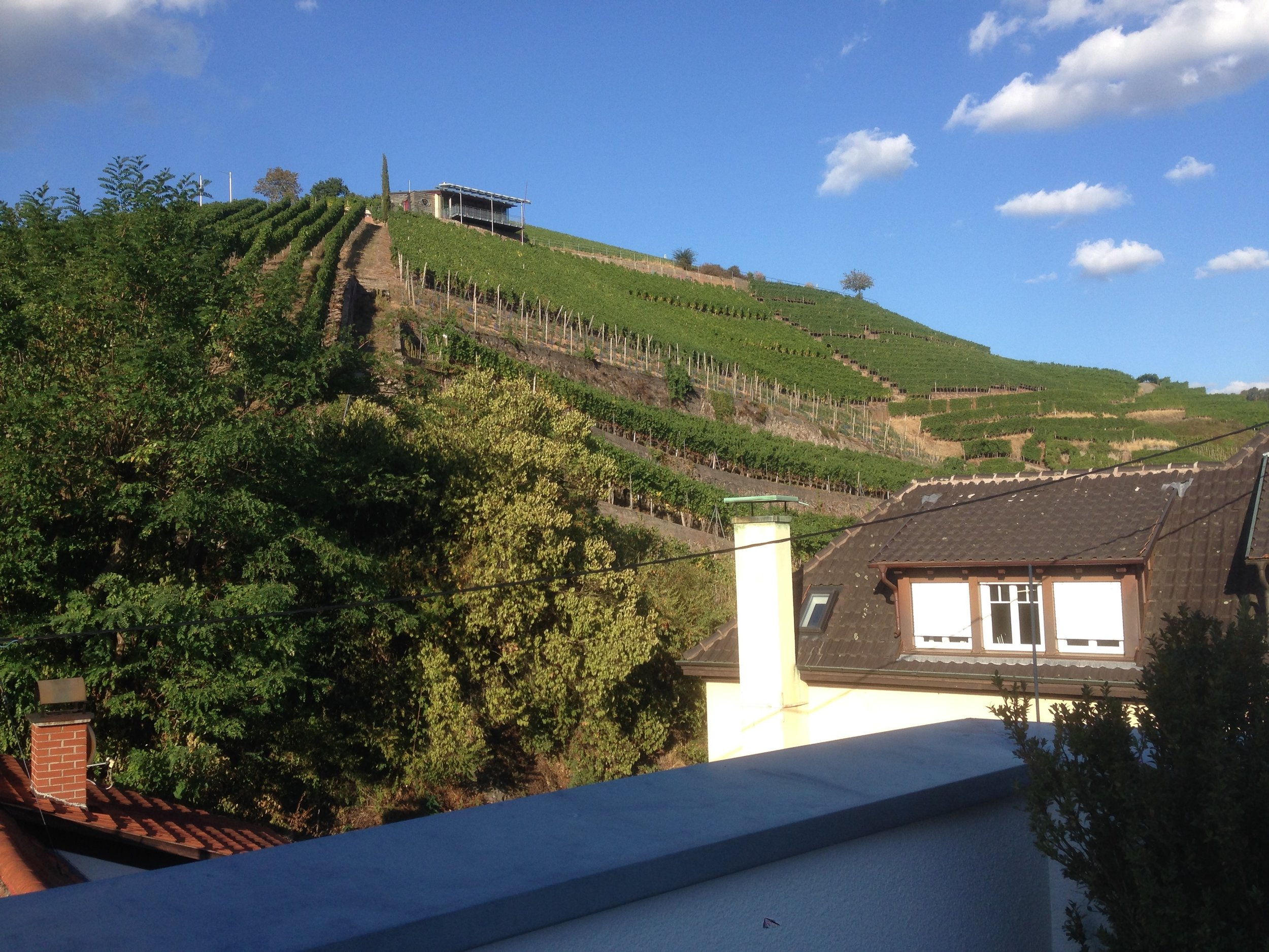 View from the Ritter Durbach spa terrace