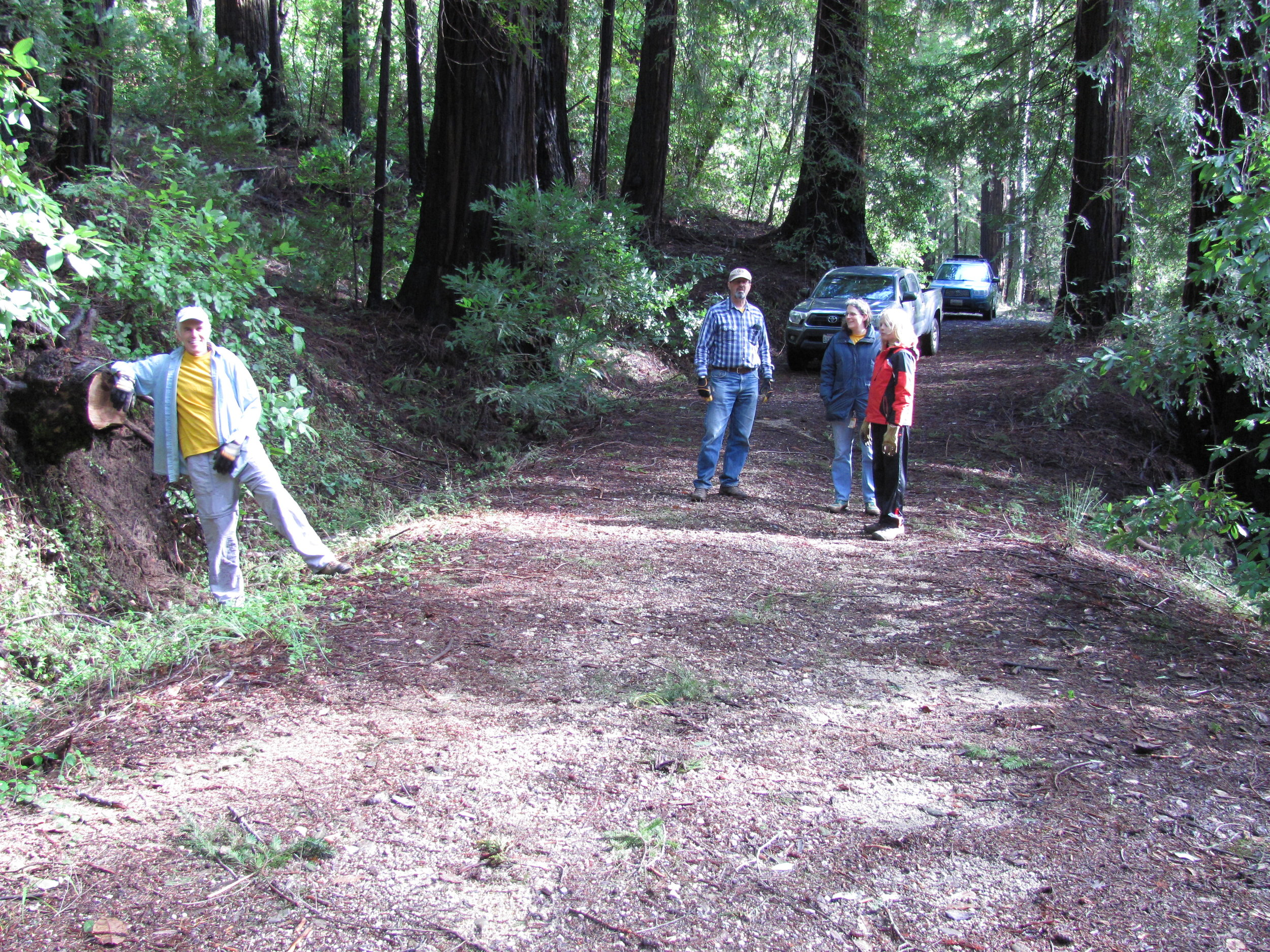 Madrone Cleared