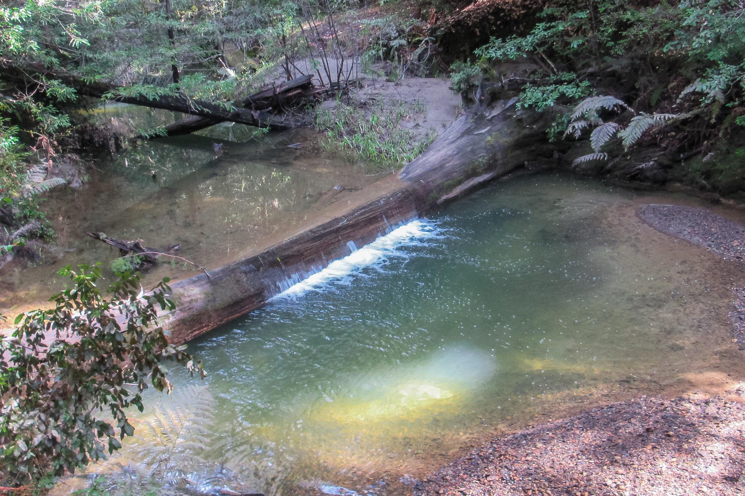 Opal Creek along STS