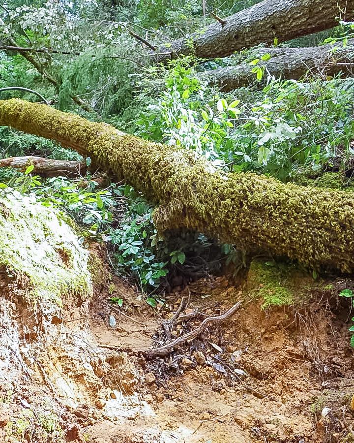 Shadowbrook Trail - Kurt Leal Photo.jpg