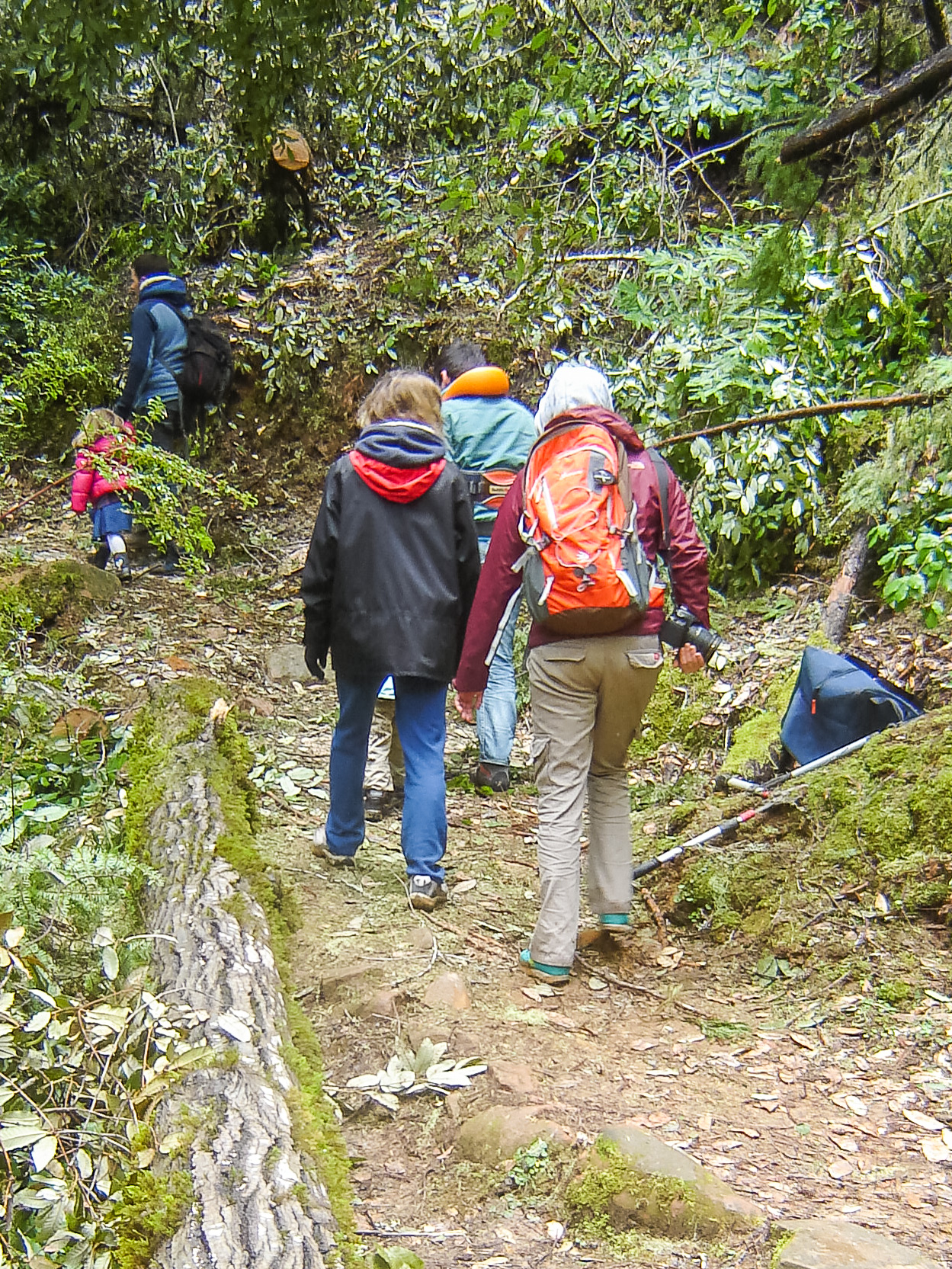 Hikers Passing Through the Just Cleared Shadowbrook Tr.jpg