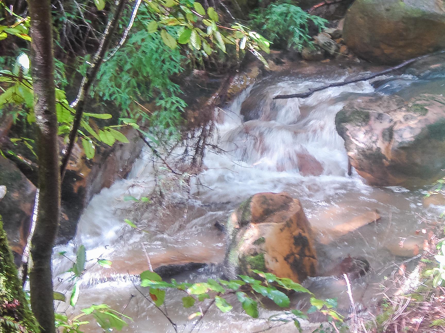 Sempervirens Creek
