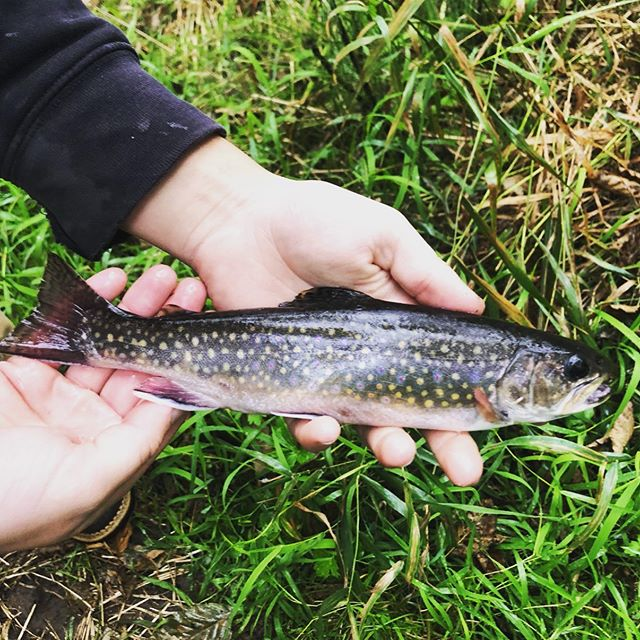 Nothing like the coloring on a brook trout!#trout #pnw #fishing #salmonfishing #lakefishing