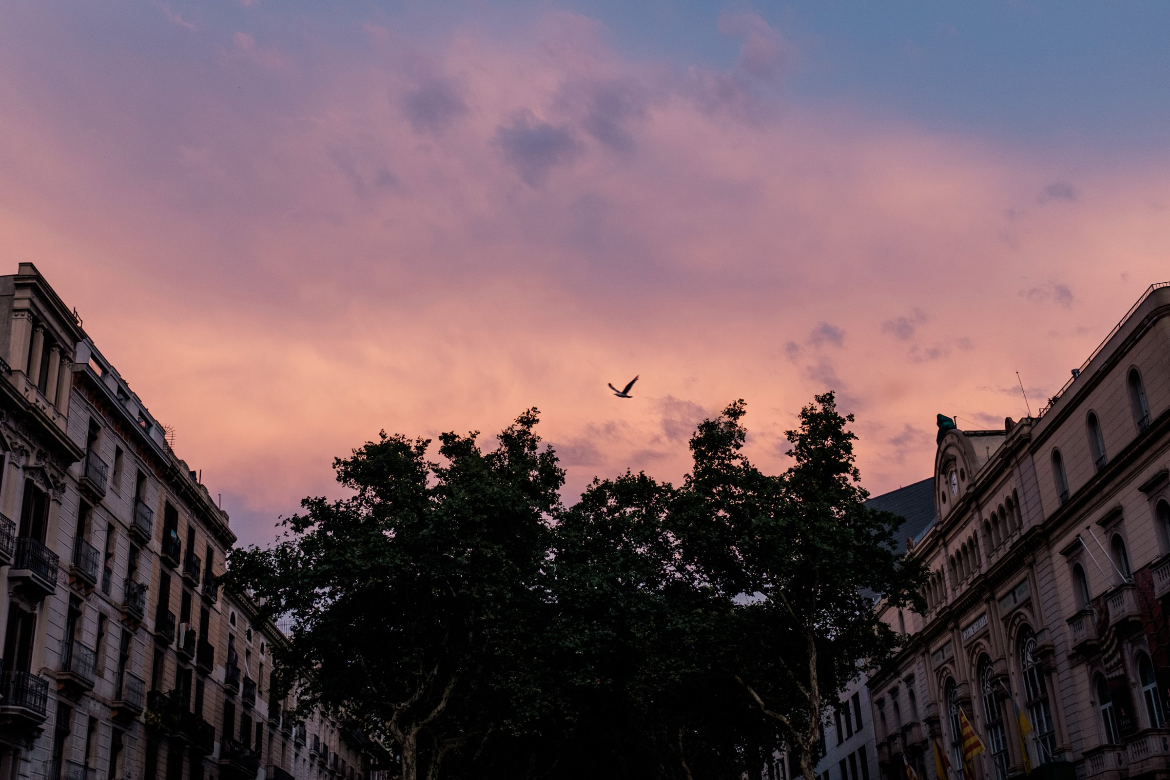 While the mid day heat brought uncomfortability, the skies were breathtaking. La Rambla, with it's central pedestrian path, was bustling with activity day and night.