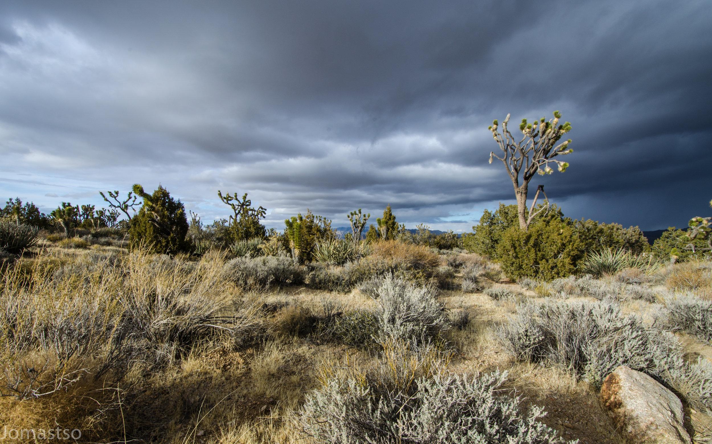 A Storm Approaches the Desert Wilderness