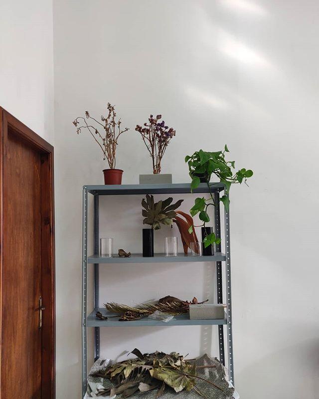 We also have living plants at the studio #malta #studiosopsis #rabat #studiosolipsis