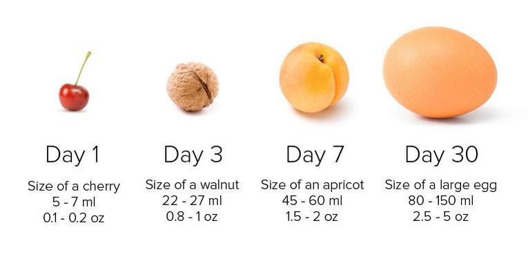 stomach_size.jpg