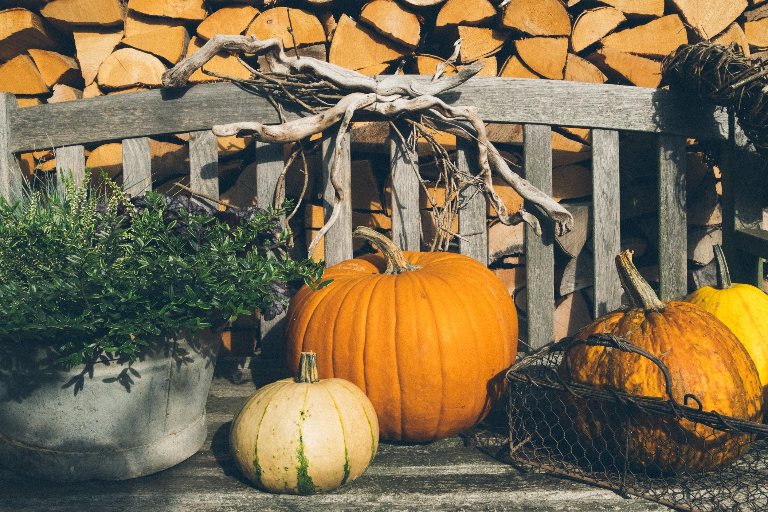 EH2132_Autumn-Still-Life.jpg