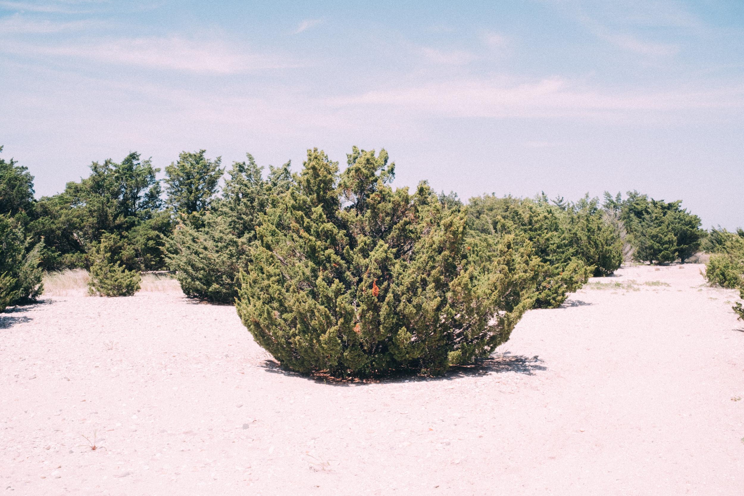 EH2246_Beach-Bushes.jpg