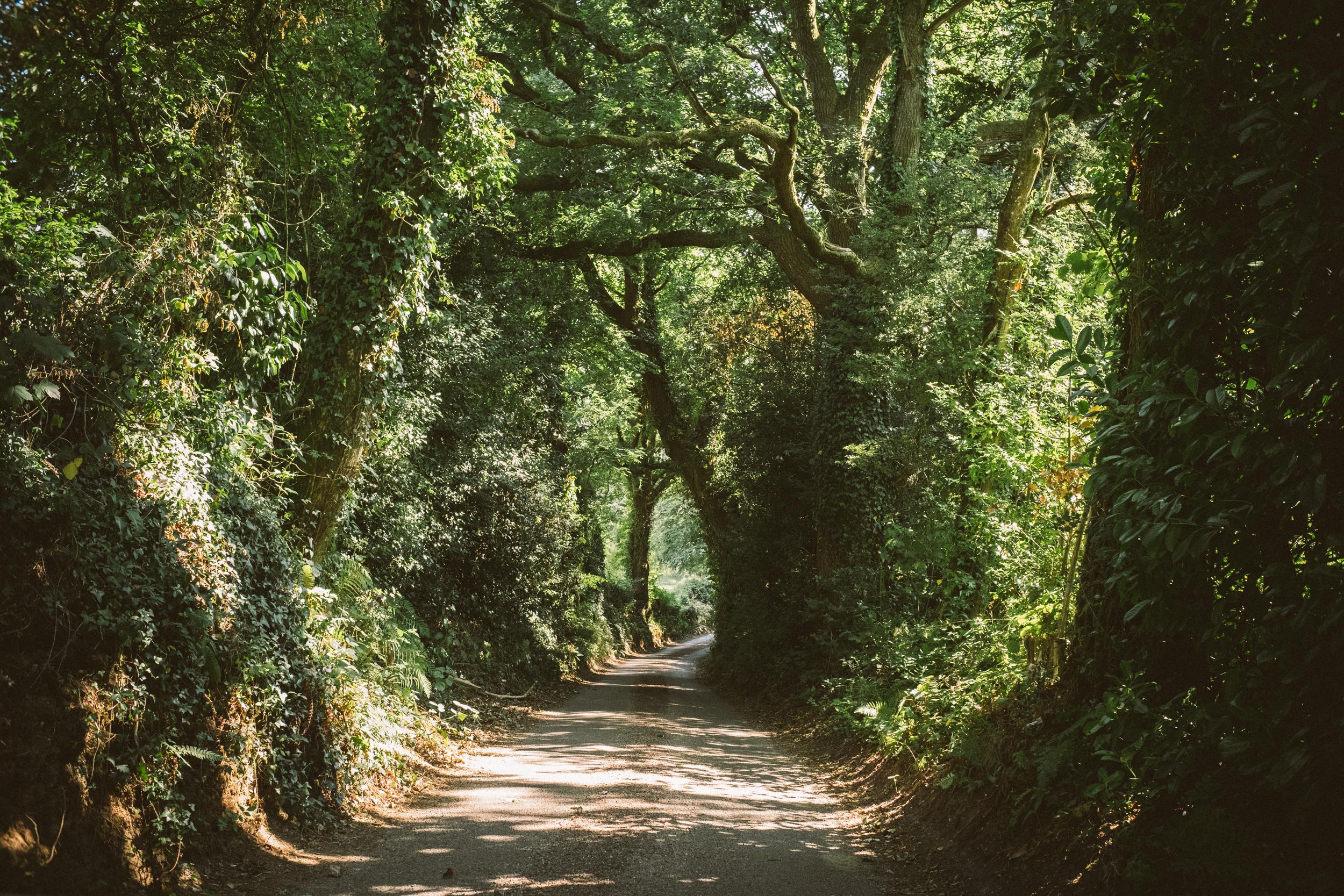 EH2292_Devon-Country-Road.jpg