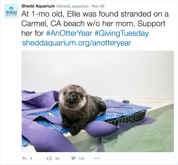 fundraising-with-social-media-shedd-aquarium-giving-tuesday-otter-ellie-1.png