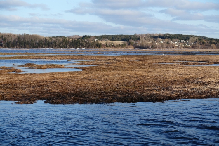 marshes-at-the-landing