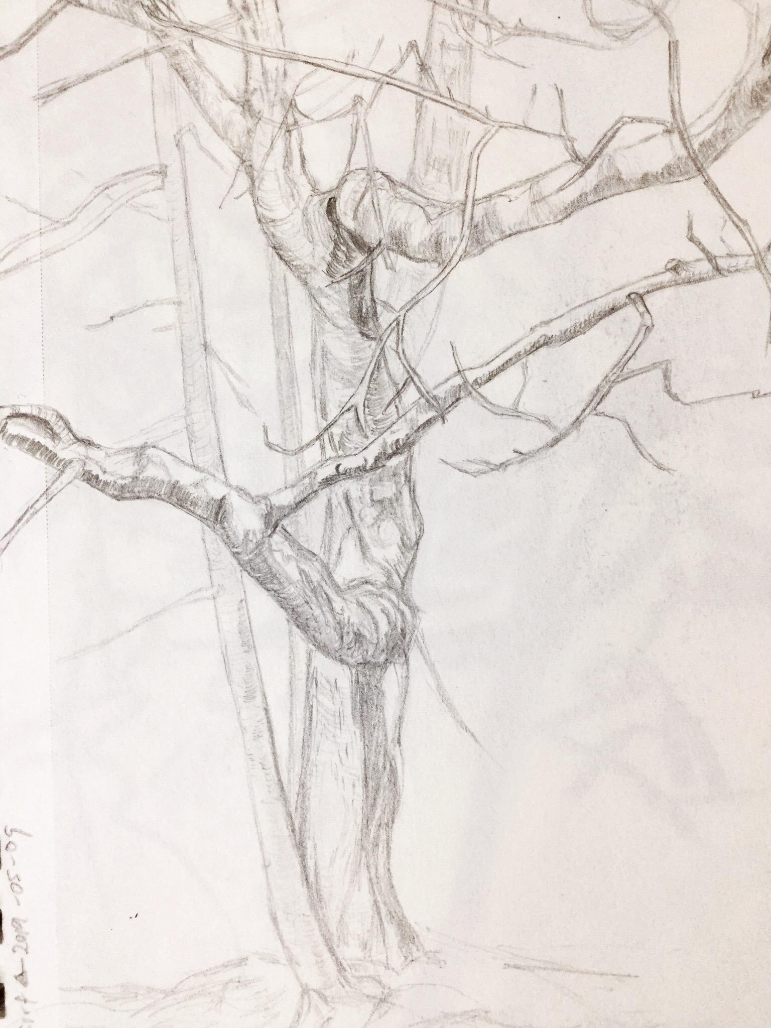 tree-study.JPG