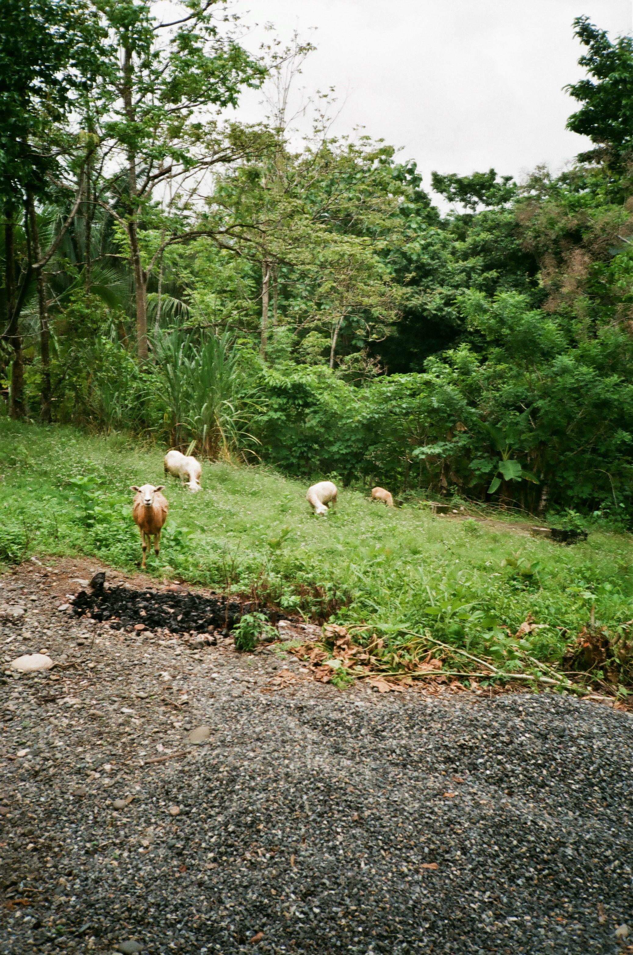 Parrita, Puntarenas Province, Costa Rica