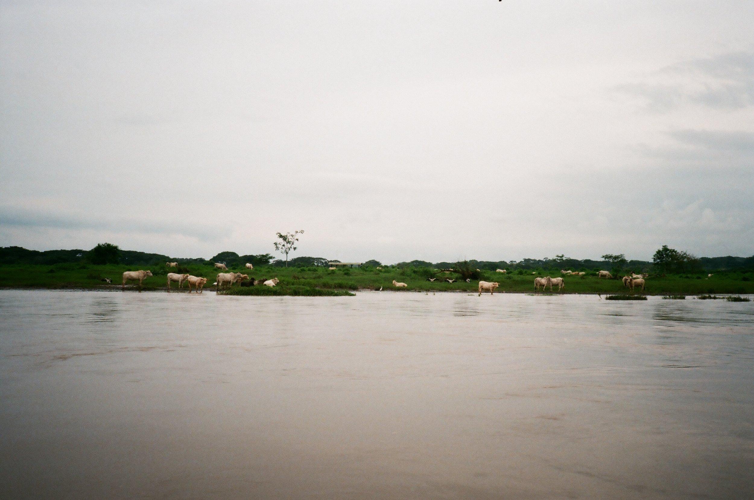 River Tarcoles, Puntarenas Province, Costa Rica