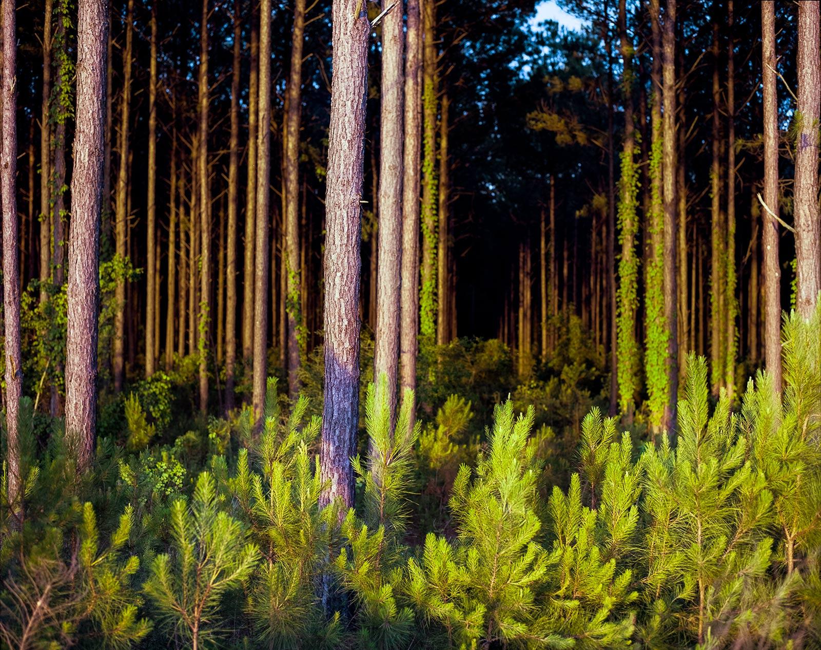 """Tree Farm."" Gulf Shores, Alabama. © Scott Cartwright 2017."