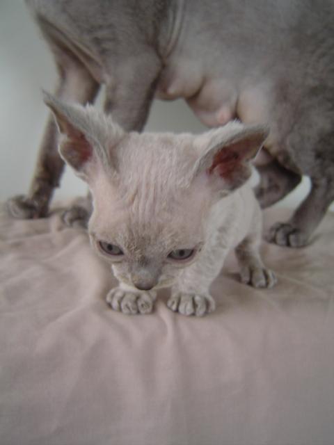 Kitten One DSC05020.JPG