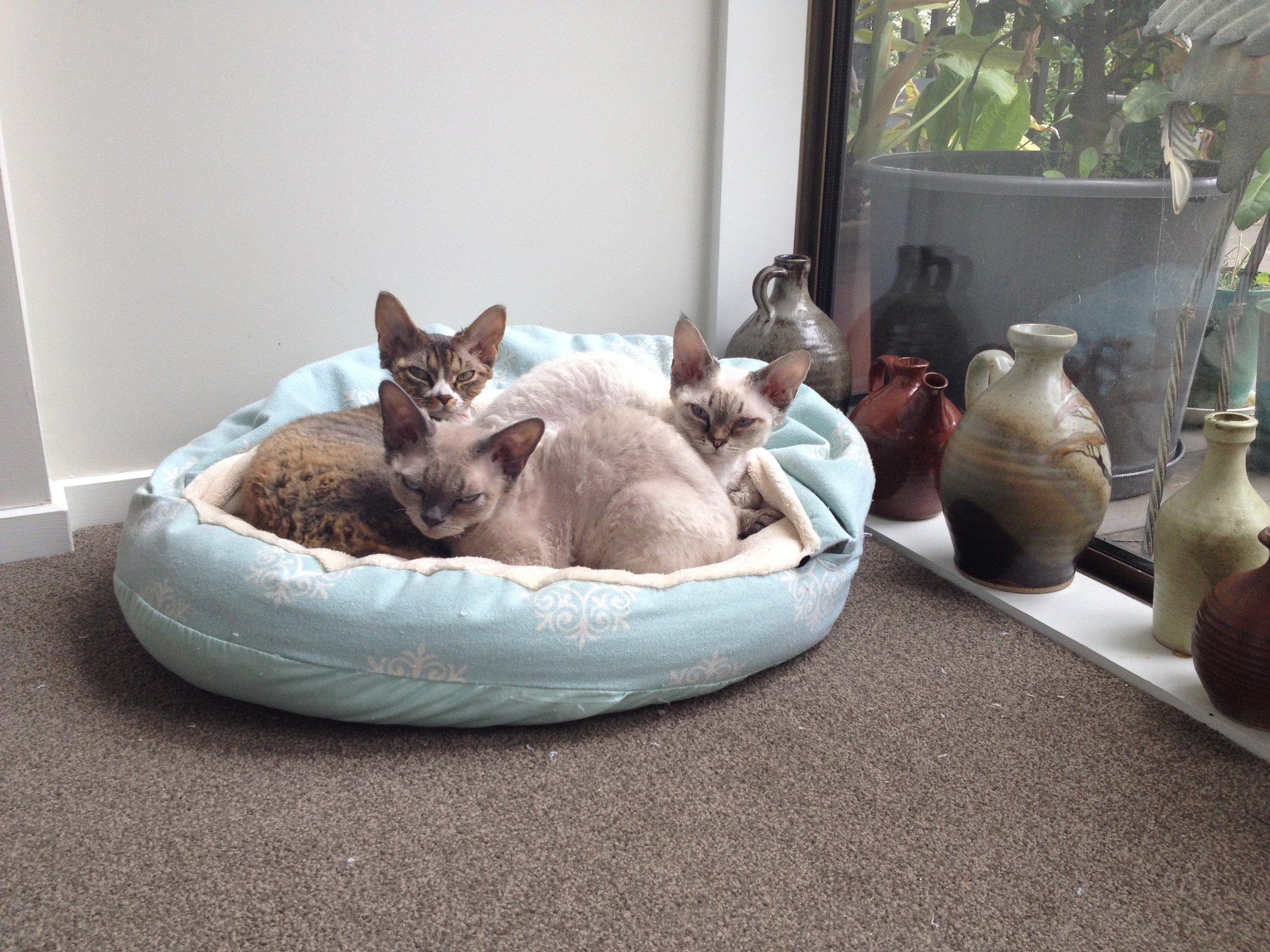 fuzzyard-cat-cubby-bed-juicy_large.jpg