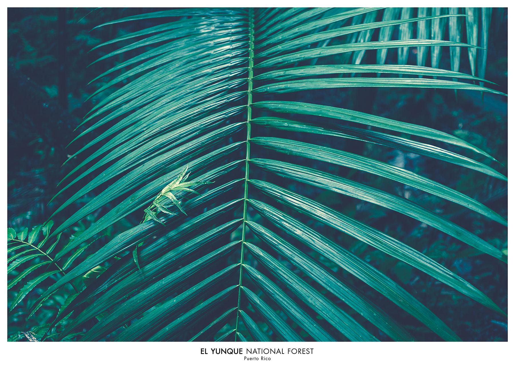 El Yunque forrest