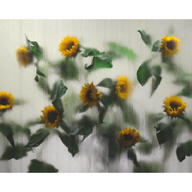 Sunflowers for @odematelier. Check out Odem Atelier's timeless collection of ceramic pieces. ⠀⠀⠀⠀⠀⠀⠀⠀⠀ Stylist @jonathankrook #konnichiwastudio⠀⠀⠀⠀⠀⠀⠀⠀⠀ .⠀⠀⠀⠀⠀⠀⠀⠀⠀ .⠀⠀⠀⠀⠀⠀⠀⠀⠀ .⠀⠀⠀⠀⠀⠀⠀⠀⠀ .⠀⠀⠀⠀⠀⠀⠀⠀⠀ .⠀⠀⠀⠀⠀⠀⠀⠀⠀ #odematelier #ceramics #art #photostudio #sunflower #fotostudio #stockholm #ikebana #timeless ##this_is_stockholm  #loves_sweden #stockholmcity #stockholmstad #svensksommar #こんにちは #stilllife #splendid_urban #studiostockholm #stockholmstudio #interior #modern #contemporary #livingroomdecor #homedetails #interiordetails #playfuloffice #igstyle #igstilllife