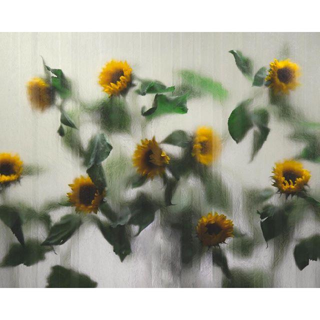 Sunflowers for @odematelier. Check out Odem Atelier's timeless collection of ceramic pieces. ⠀⠀⠀⠀⠀⠀⠀⠀⠀ Stylist @jonathankrook #konnichiwastudio⠀⠀⠀⠀⠀⠀⠀⠀⠀ .⠀⠀⠀⠀⠀⠀⠀⠀⠀ .⠀⠀⠀⠀⠀⠀⠀⠀⠀ .⠀⠀⠀⠀⠀⠀⠀⠀⠀ .⠀⠀⠀⠀⠀⠀⠀⠀⠀ .⠀⠀⠀⠀⠀⠀⠀⠀⠀ #odematelier #ceramics #art #photostudio #sunflower #fotostudio #stockholm #ikebana #timeless ##this_is_stockholm  #loves_sweden #stockholmcity #stockholmstad #svensksommar #こんにちは #stilllife #splendid_urban #studiostockholm #stockholmstudio #interior #modern #contemporary #livingroomdecor #homedetails #interiordetails #playfuloffice #igstyle #igstilllife
