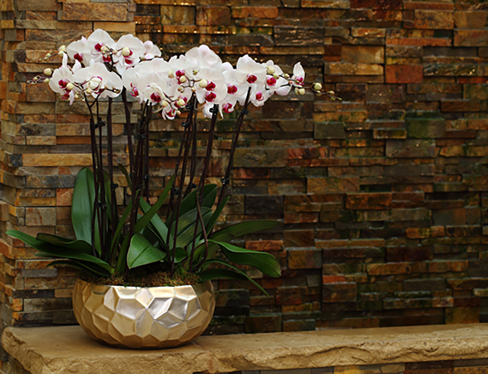 Planter-of-White-and-Burgundy-Orchids.jpg