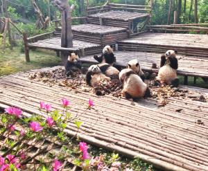 #BandaPanda #PandaTeam #PandaCrew