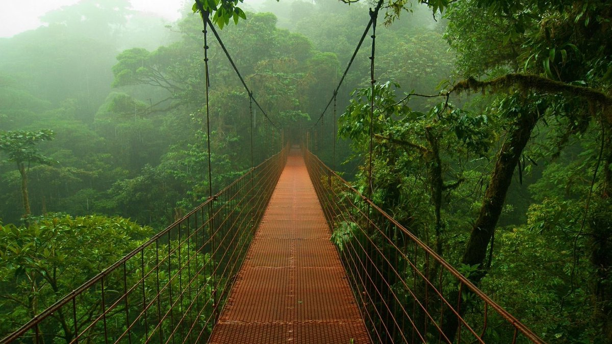 A long hanging bridge surrounded by a vast of green trees and plants in the forest.