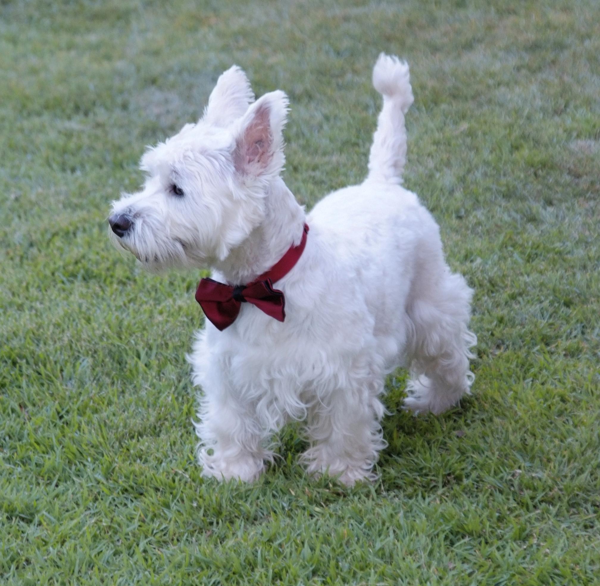 Monty Dog