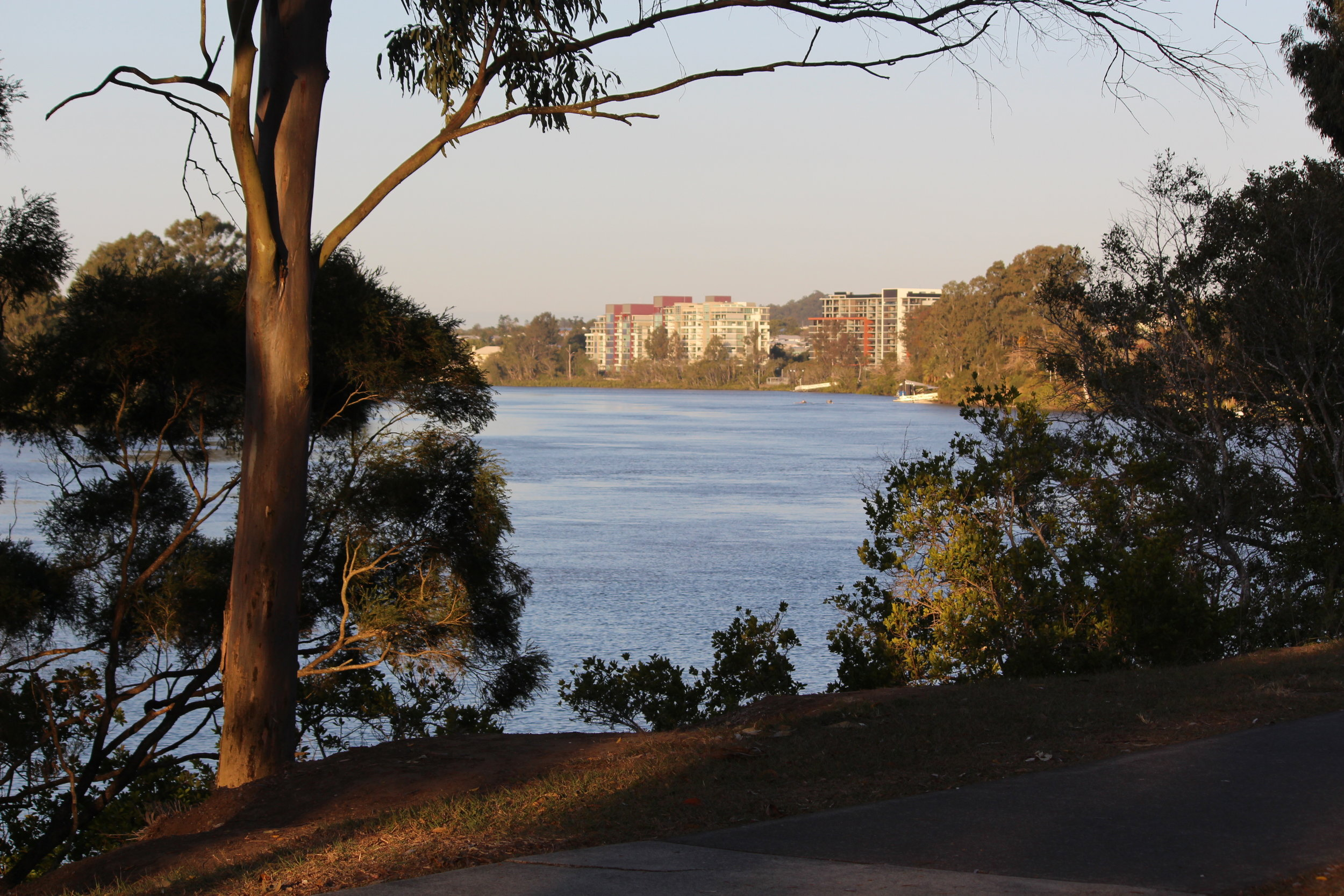 From Oxley Creek, looking up Canoe Reach to the Mirvac apartments